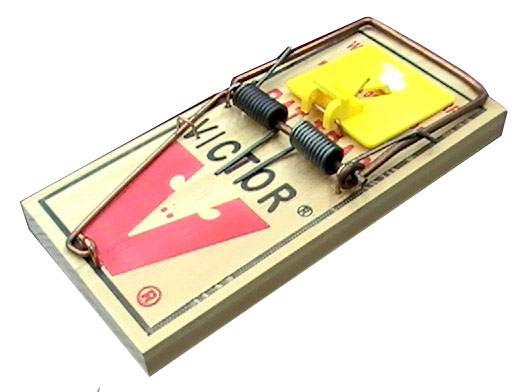 mouse trap cases View homework help - mouse trap from mba research at eslsca final exam trap-ease: the big cheese for the mousetraps (case study) tarek mohamed elashraf abd-elaziz group 50b no 34 executive.